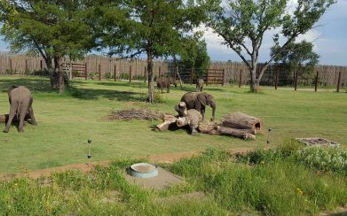 Featured Project Reed Family Elephants Sedgwick County Zoo 05