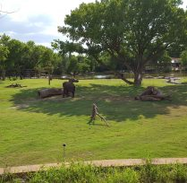 Featured Project Reed Family Elephants Sedgwick County Zoo 06